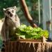 Schönbrunner Tiergeschichten - Leben im Zoo