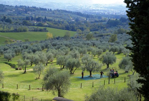 Bild 1 von 4: Auf den Hügeln von Fiesole unweit des \