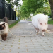 Die 100 witzigsten Tiere - Ich glaub, mein Schwein pfeift