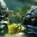Bilder zur Sendung: Gr�ne Ameisen - Freund oder Feind?