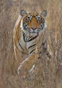Tierische Instinkte - Der Kampf ums Überleben