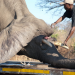 Projekt XXL - Elefanten ziehen um