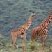 Bilder zur Sendung: Wilde �berlebensk�nstler - Wie Tiere schlafen