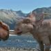Bilder zur Sendung: Dinosaurier - Im Reich der Giganten