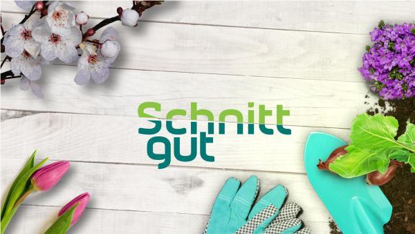 Bild 1 von 2: Logo zur Sendung Schnittgut. Alles aus dem Garten