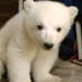 Die 30 schönsten Berliner Zoogeschichten