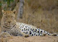 Afrika - Von Bäumen und Tieren