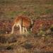 Ein Tag in der Wildnis - Überleben in Australien
