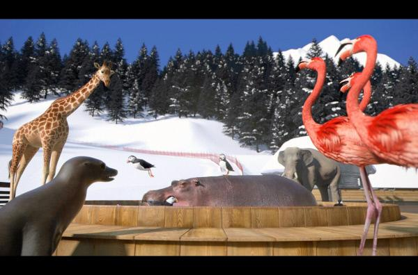 Bild 1 von 1: Eigentlich wollte das Nilpferd in Ruhe im heißen Wasser entspannen, doch die Papageientaucher funken dazwischen.