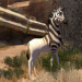 Khumba - Das Zebra ohne Streifen