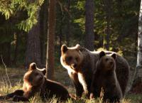 Expeditionen ins Tierreich