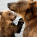 Bärenstark - Revolutioniert Meister Petz die Medizin?