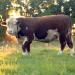Tierisch tierisch - Von Rindern und Rennpferden