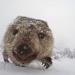 Abenteuer Winter - Tiere im Schnee