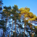 Borkenkäfer, Klimawandel und Corona - Wie geht es unserem Wald?