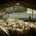Bilder zur Sendung: Wildes Neuseeland
