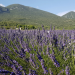 Die Provence mit allen Sinnen erleben