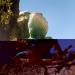 Bilder zur Sendung: Hidden Kingdoms - Im Königreich der kleinen Tiere, Teil 1