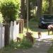 Wilde Tiere vor der Haustür