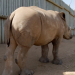 Uncovered: Illegaler Handel - Das lukrative Geschäft mit exotischen Tieren