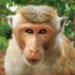 Bilder zur Sendung: Im Reich der Affen