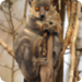 Bilder zur Sendung: Madagaskar - In den W�ldern der Lemuren