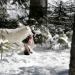 Winter im Wildpark Mautern