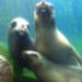 Bilder zur Sendung: Seehund, Pume & Co