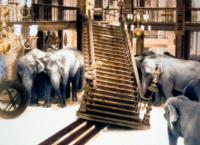 Elefantenpfad