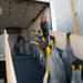 Bilder zur Sendung: Leben im Frack - Pinguine
