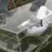 Die verrücktesten Videos der Welt: Lebendig begraben