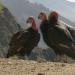 Beruf Tierfilmer