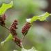 Heilen mit Pflanzen - Phytotherapie