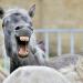 111 verrückte Viecher - Die witzigsten Tiere der Welt