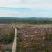 Abgeholzt - Wie Europas letzte Urwälder verfeuert werden