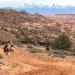 Unter Cowboys und Navajos