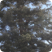 Bilder zur Sendung: The Woodsmen - Leben in den B�umen