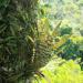 Undercover im Dschungel