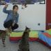 Anna und die Haustiere