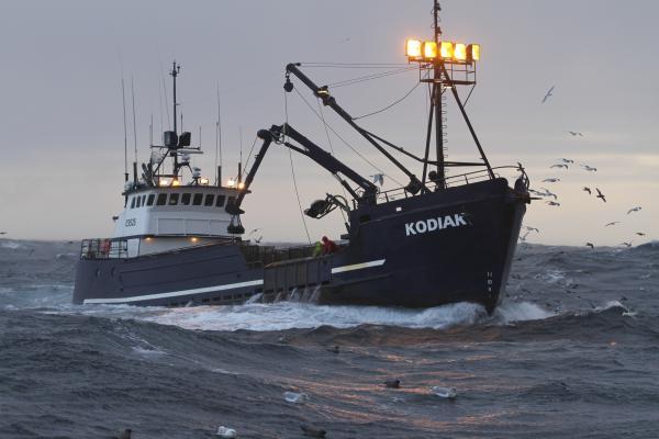 Bild 1 von 4: Kodiak