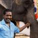Elefantenparadies Südindien