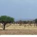 Bilder zur Sendung: Gazellen - Der große Sprung in die Sahara