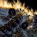 Bilder zur Sendung: Wilde �berlebensk�nstler - Wie Tiere durchhalten