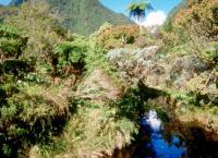 Mauritius - Schatzinsel im Indischen Ozean