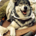Bilder zur Sendung: Wolfsblut