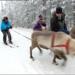 Bilder zur Sendung: Wir lieben ... Finnland