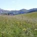 Kräuterwelten - In den Alpen