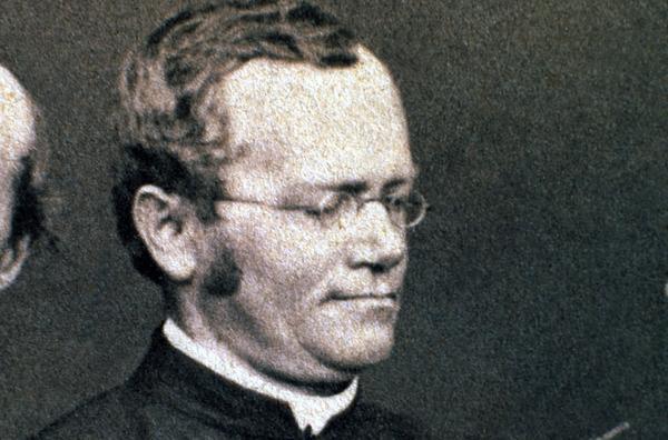Bild 1 von 5: Ein österreichischer Mönch, Gregor Mendel, entdeckte die Grundlagen der Vererbung durch das Kreuzen tausender Erbsenpflanzen.