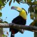 Costa Rica - Natur unter dem Regenbogen