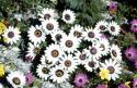 Namaqualand - Der Blumengarten Afrikas